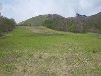 小丸山の斜面も緑に