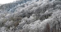 霧氷(六方沢近く)